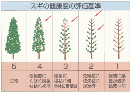 スギの健康度の評価基準(出典:神奈川県環境部大気保全課)